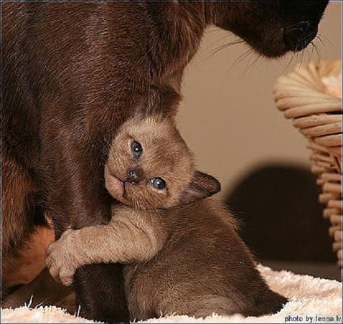 Самое доброе, любящее и заботливое сердце у мамы.