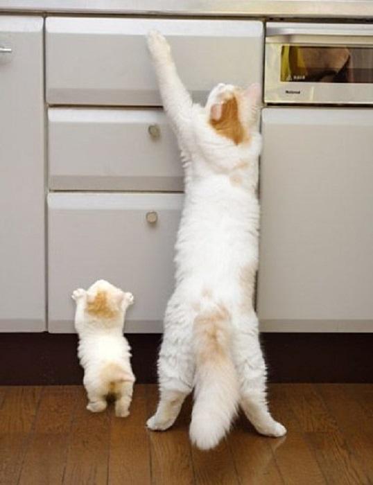 Мама обучает котенка.