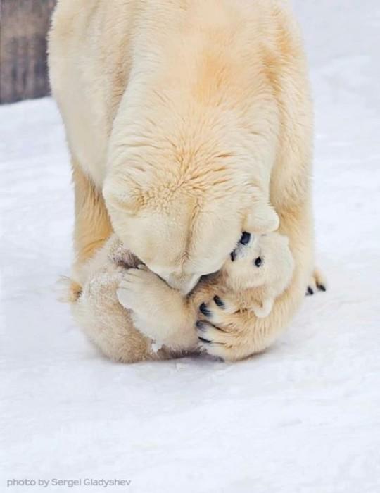 Медведица заботится о своём маленьком медвежонке.