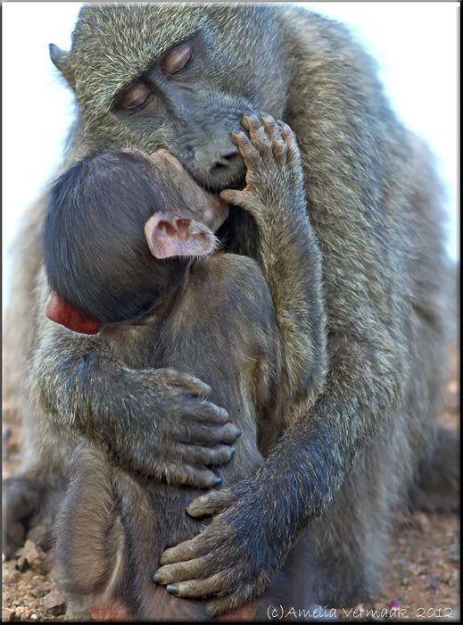 Самка обнимает своего детёныша.