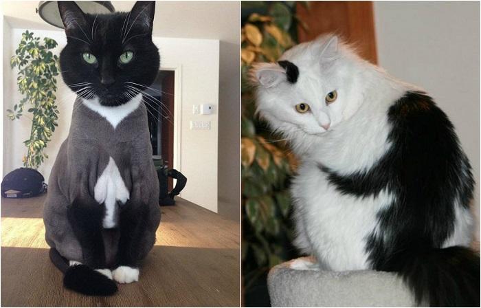 Удивительные кошки с затейливым окрасом.
