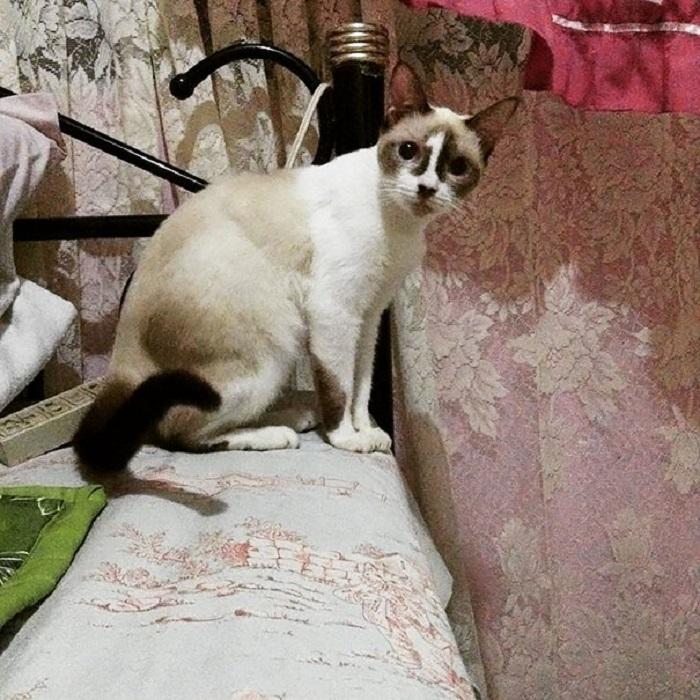 Кошка с номером «1» на лбу всем своим видом показывает, что хочет быть первой у миски с кормом.