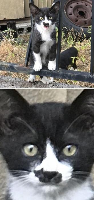 Маленький черно-белый котенок с пятнышком в виде кошачьего силуэта.