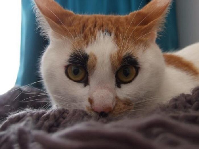… а в итоге получилась уникальная трехцветная кошка!