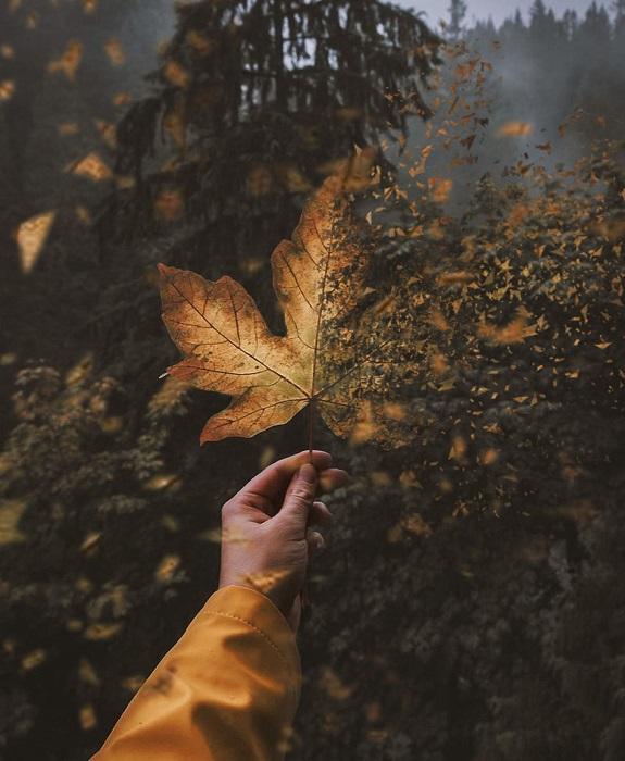 Золотая осень – время, когда природа засыпает, чтобы вновь возродиться весной во всем своем великолепии и многообразии.
