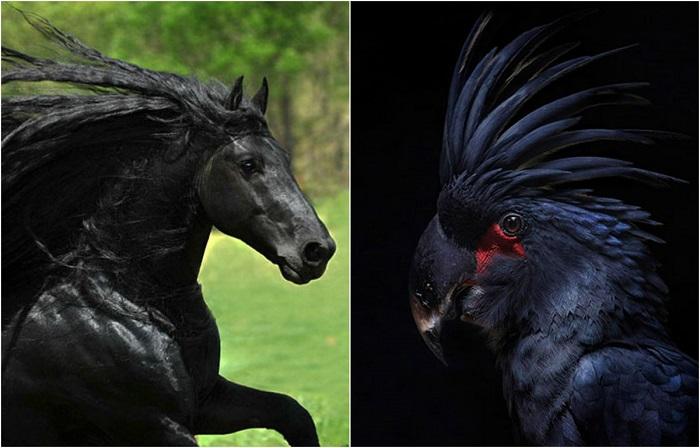 Животные, которые выглядят как звезды тяжелого рока.