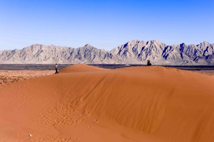 Несмотря на то, что Сонора является одной из самых крупных и жарких пустынь Северной Америки, здесь проживает большое количество птиц, насекомых, земноводных и пресмыкающихся, а также произрастает более 2000 видов разнообразных растений.