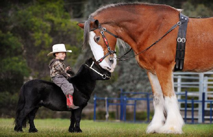 Мини-лошадки с успехом катают детей верхом до трёх лет.