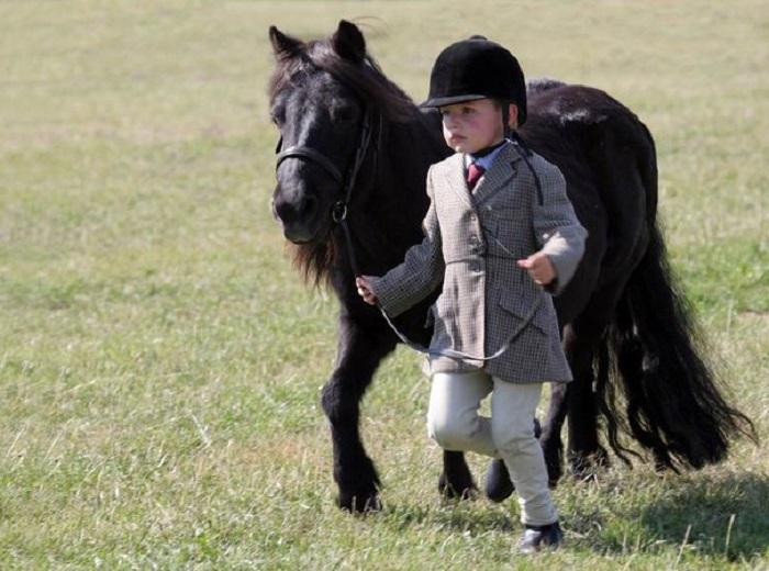При помощи мини-лошадок лечат детей с ДЦП, аутизмом и неврозами.