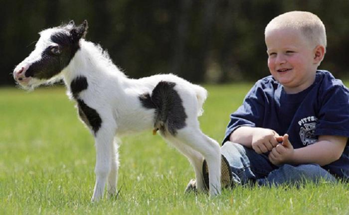 Мини-лошадки помогают детям с особыми потребностями.