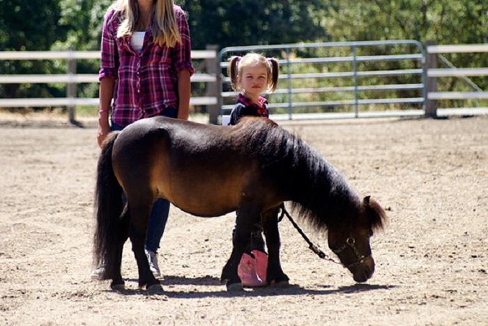 Лошадка способна тащить на себе груз в 20 раз превышающий собственный.
