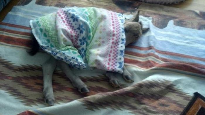 «Спит как боевая лошадь».