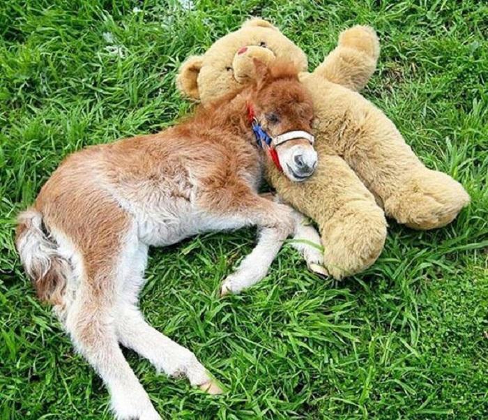 Мини-лошадка имеет милую внешность, добрый характер и маленький размер.