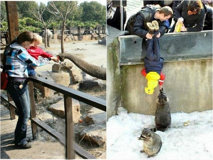 Правилах поведения в зоопарке полезно знать и родителям и детям любого возраста.