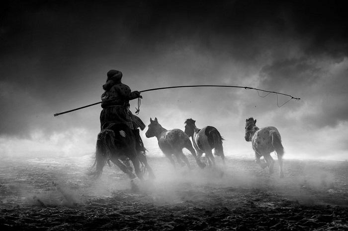 Поощрительной премией награжден китайский фотограф Сяолян Донг (Xiaolian Dong), запечатлевший верхового скотовода за работой.