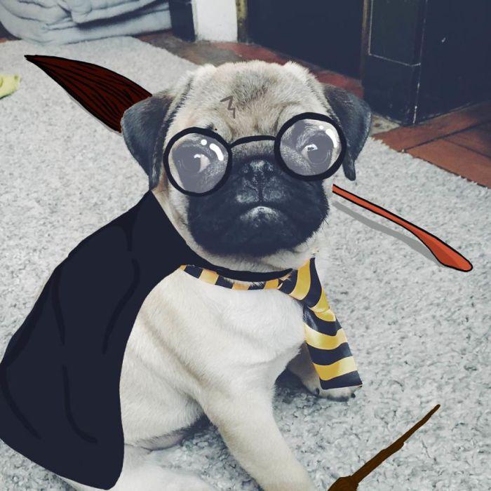 Когда Гарри Поттеру не удалось заклинание.