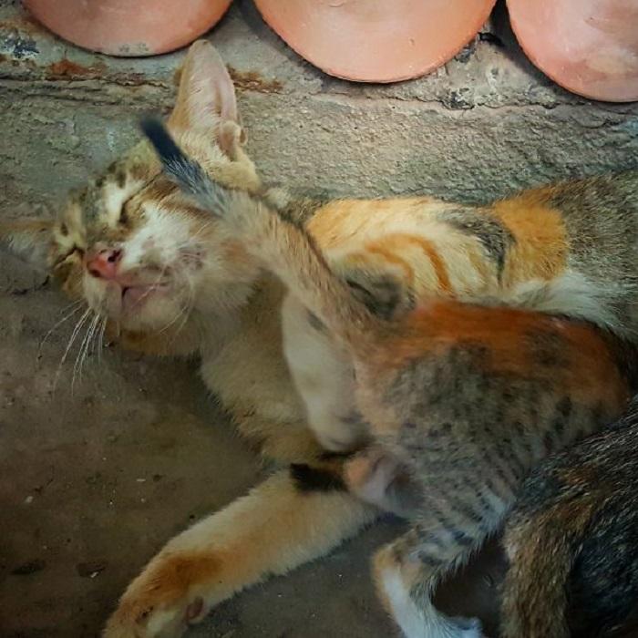Уличная кошка с котёнком.