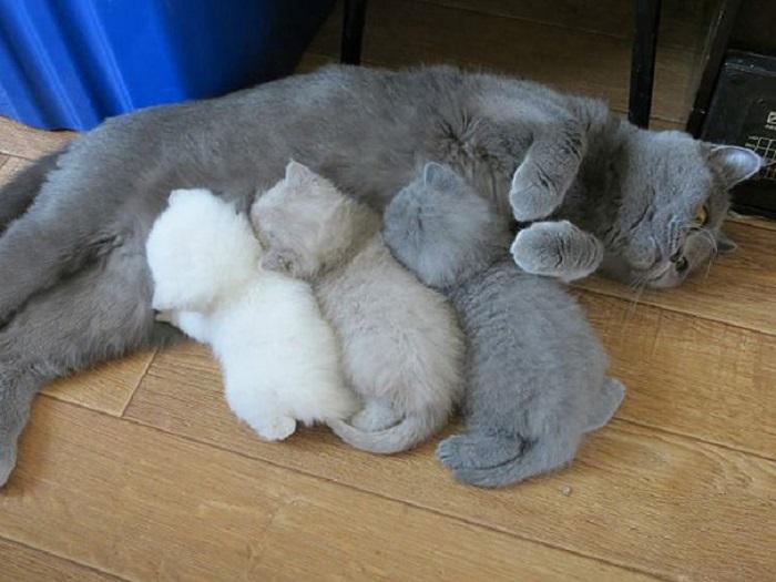 И на кого же похожи котята?