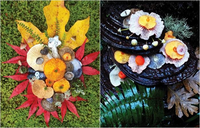 Яркие натюрморты из грибов.