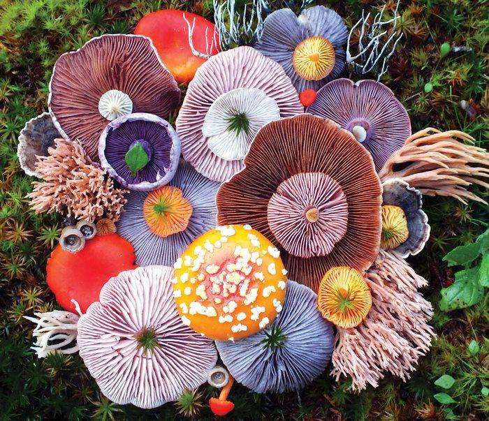 Художественная композиция из шляпок разноцветных грибов.
