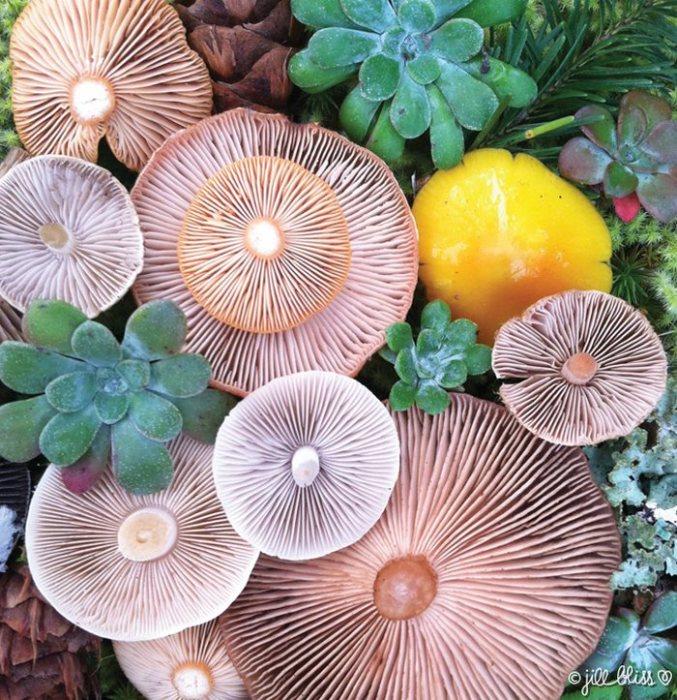 Исследуя остров, на котором проживает, Джилл находит множество материалов для реализации грибных натюрмортов.
