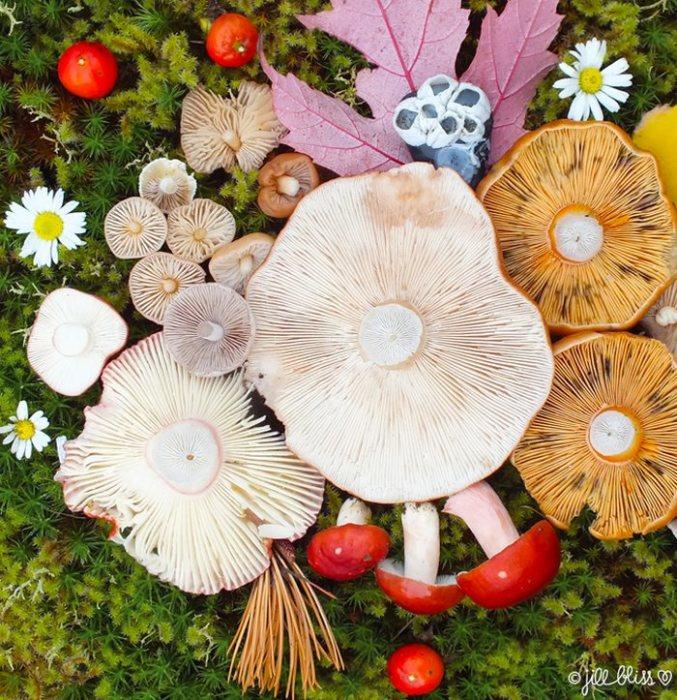 Природа вдохновляет художницу на создание невероятно ярких и гармоничных инсталляций.