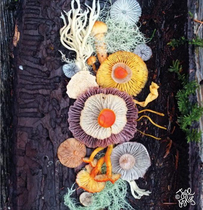 Неиссякаемая фантазия художницы превращает грибы в замысловатые волшебные цветы.