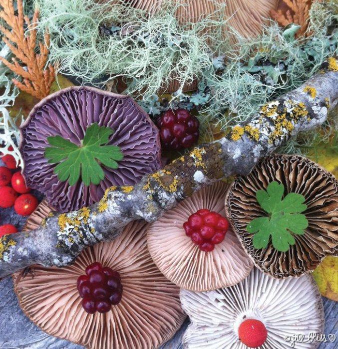 Своей серии из многочисленных фотографий грибных композиций Джилл дала название «Природная мозаика».