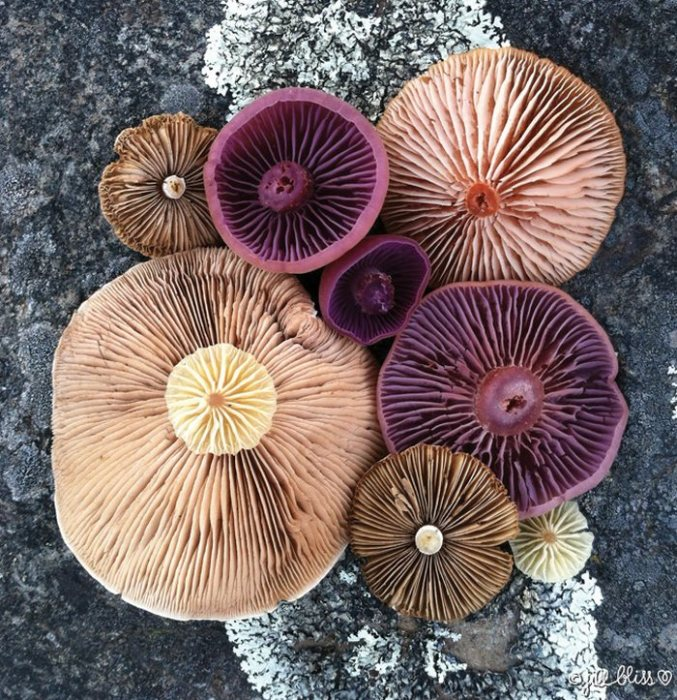 Разноцветные грибные шляпки являются центральными объектами при создании инсталляции.