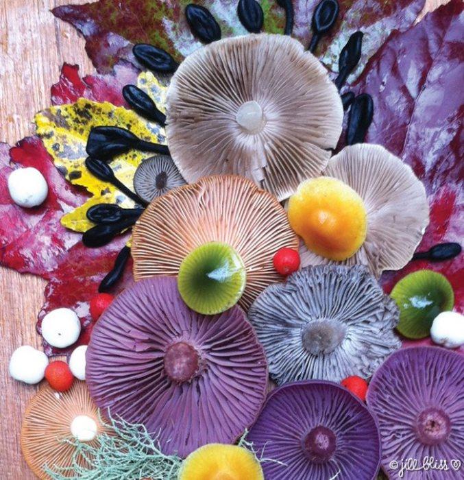 Для своих композиций художница использует как съедобные, так и ядовитые грибы.