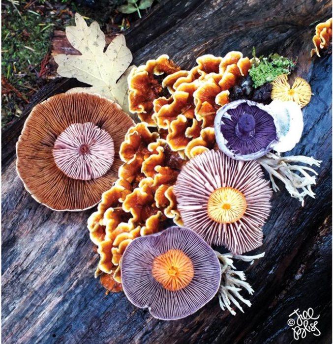 Наряду с растениями и животными грибы образуют третье царство организмов.
