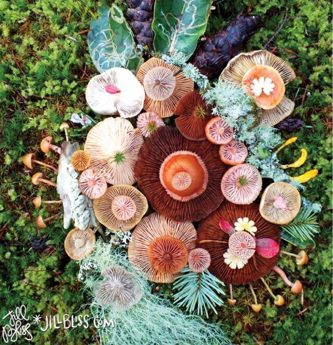 Художница-натуралист собирает понравившиеся растения и создает из них невероятные композиции.