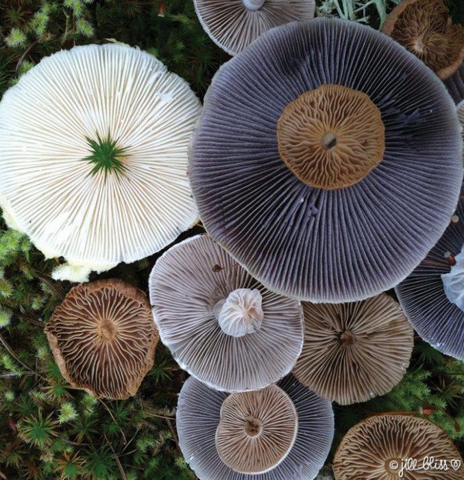 Сегодня науке известно около 100 тысяч видов грибов.
