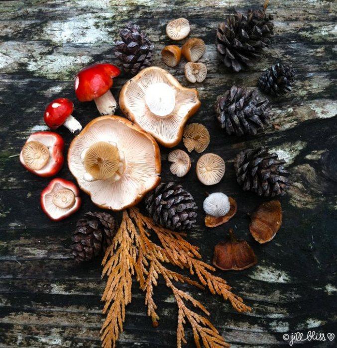 Основой для создаваемых композиций служат стволы деревьев, трава, опавшие листья и камни.