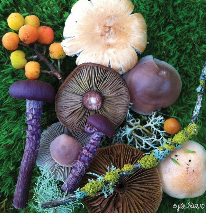 Волшебный грибной микс от талантливой Джилл Блисс.