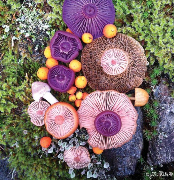 Некоторые грибы очень маленького размера, поэтому требуется невероятное терпение и ловкость, чтобы разместить их в создаваемой композиции.