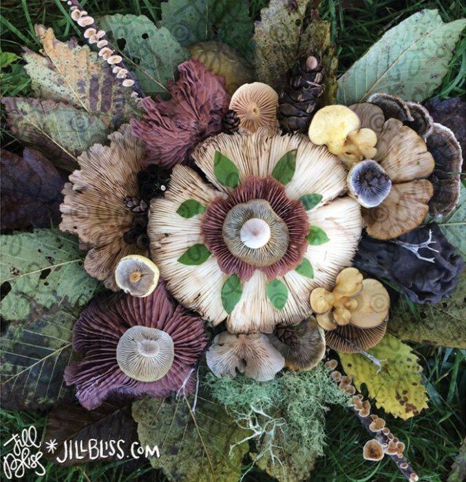 Кажется невероятным, но у грибов больше общего с животными, чем с растениями.