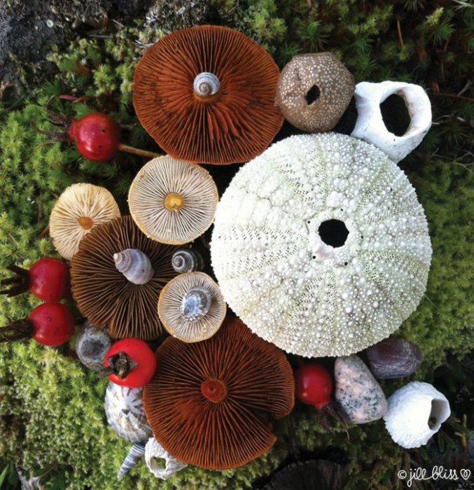 Удивительно красочные грибы вполне могут претендовать на танцевальную площадку для крошечных волшебных созданий.