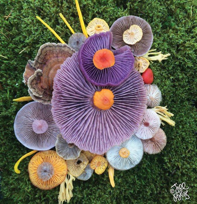 Яркие природные краски расцветают на фотографиях, созданных художницей-натуралистом.