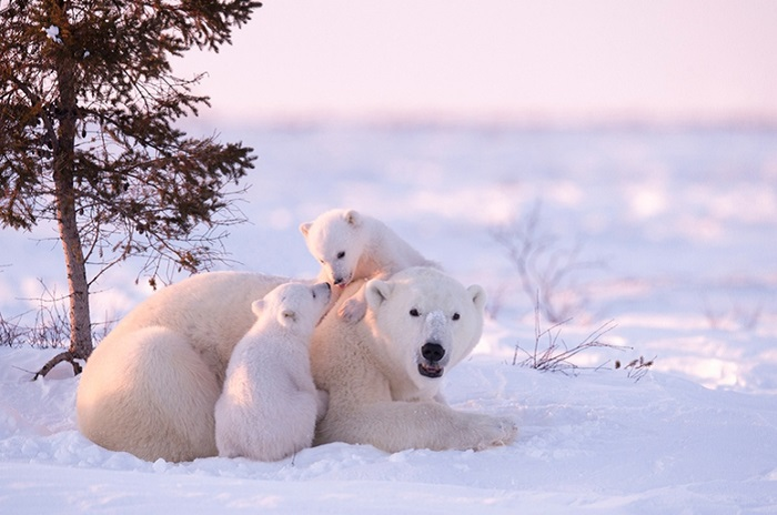 А для Дейзи такая экстремальная съемка в полярном регионе стала настоящим испытанием.