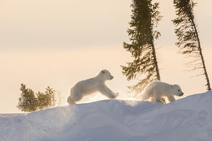 По мнению Дейзи, показывать красоту дикой природы и животных, находящихся под угрозой, – это обязанность фотографов.