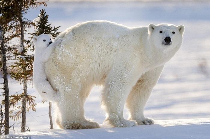С помощью уникальной силы фотографии Дейзи Джилардини стремится привлечь внимание людей к проблемам дикой природы.