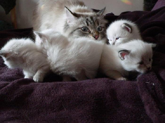 Без маминого внимания не останется ни один котенок.