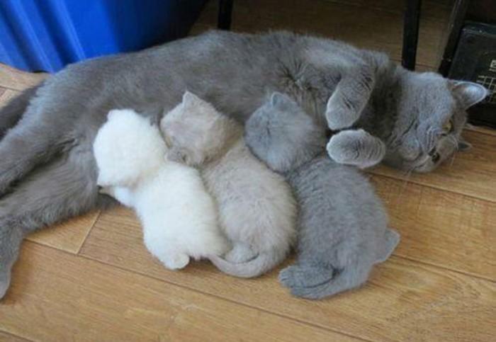 Кошка-мама и ее маленькие разноцветные копии.