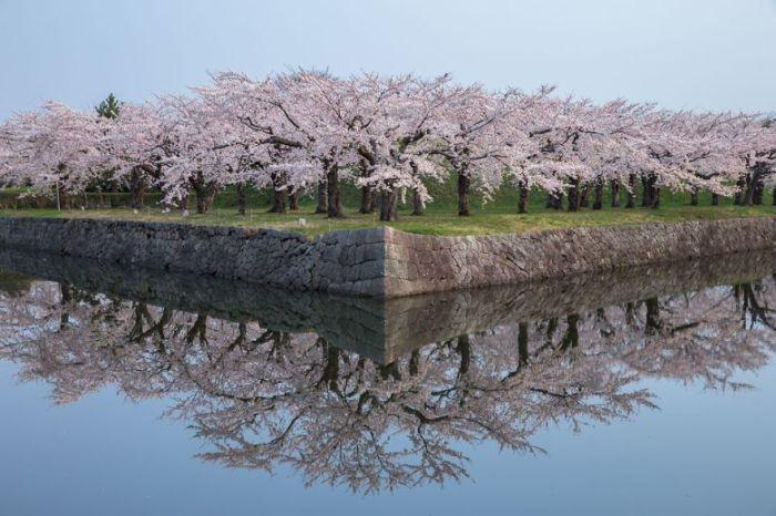 Автор фотографії: Хіроші Таніта (Hiroshi Tanita).