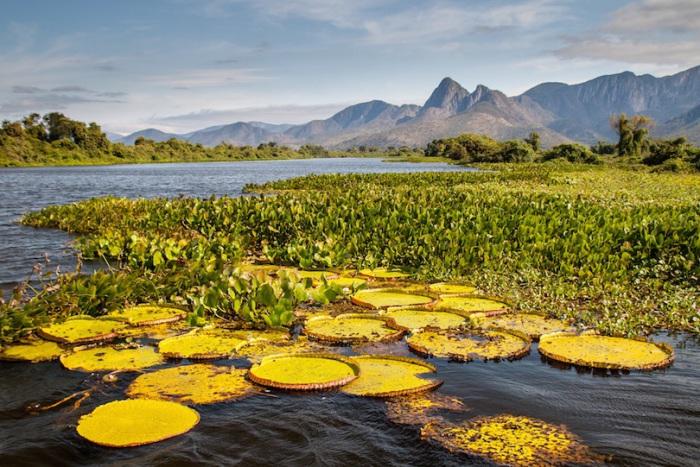 Национальный парк Пантанал сам по себе является жемчужиной Южноамериканского континента благодаря редкому природному разнообразию.