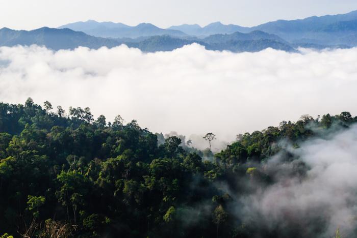 Благодарю тому, что данному региону присущ вечнозеленый лес, этот парк служит местом жительства многих редких животных, среди которых отдельное место занимают разнообразные виды слонов.