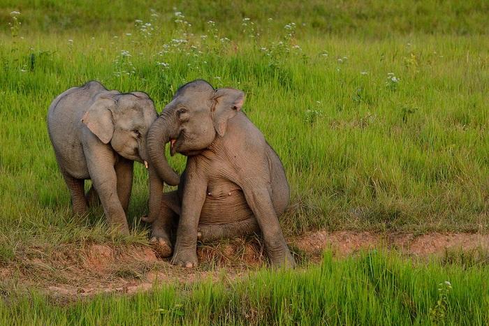 Самые красивые национальные парки в Таиланде.