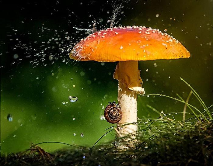 Улитка, под своим грибным зонтом.