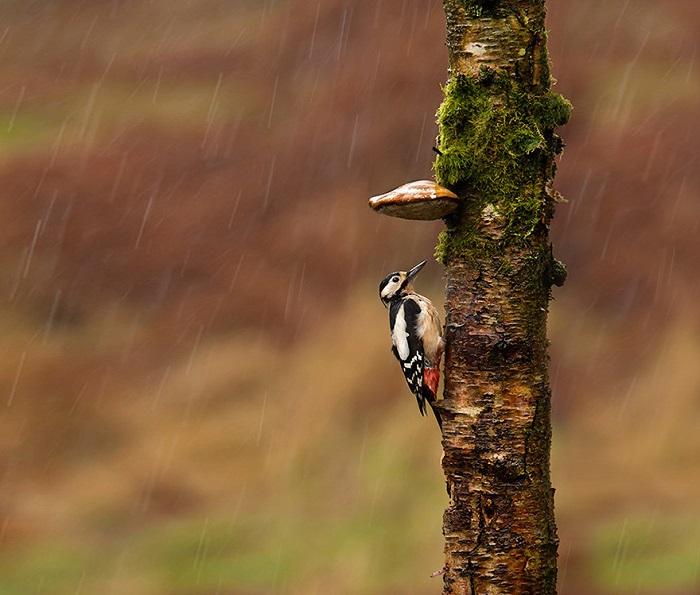 Дятел нашел отличный навес, который защищает его от дождя.